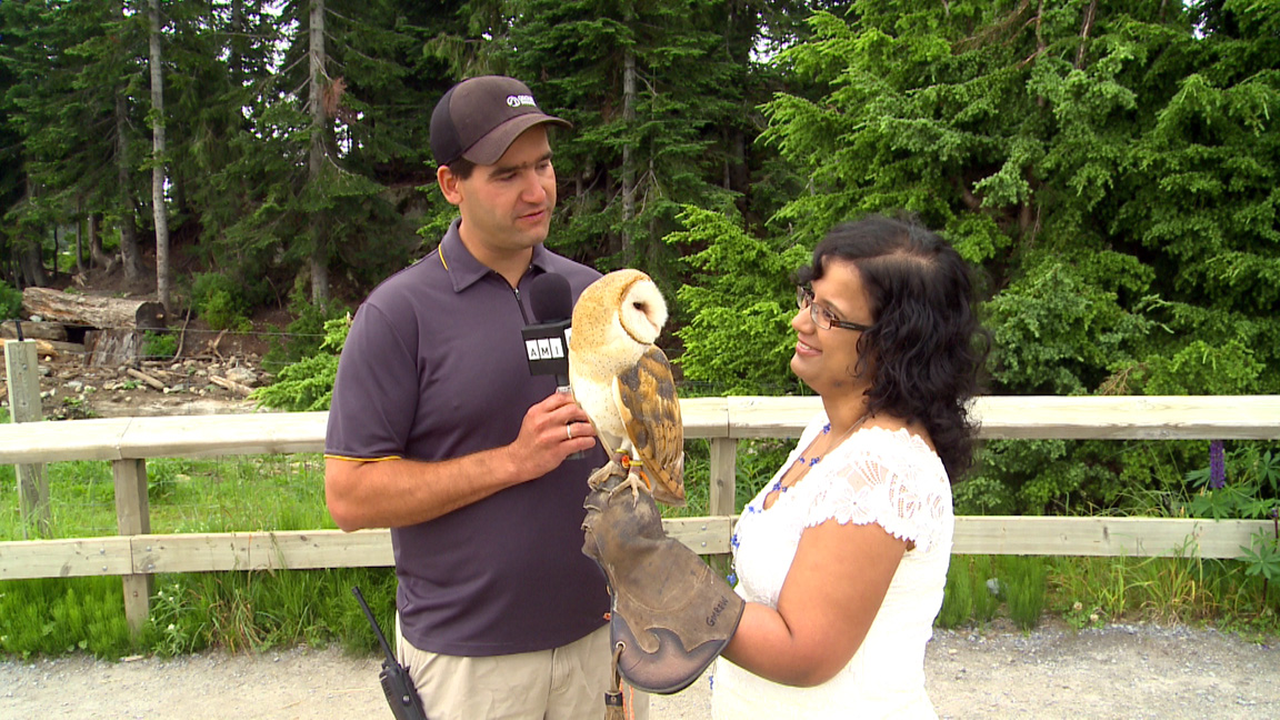 Kristy with Tito, the Grouse Mountain barn owl